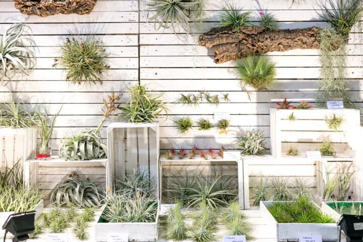 Myplant garden interni magazine for Progettazione della costruzione domestica