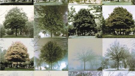 Cesare Leonardi, Carpinus Betulus, 1962-1963. Courtesy Archivio Architetto Cesare Leonardi
