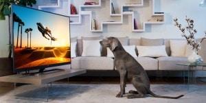 Philips TV 7502 dog