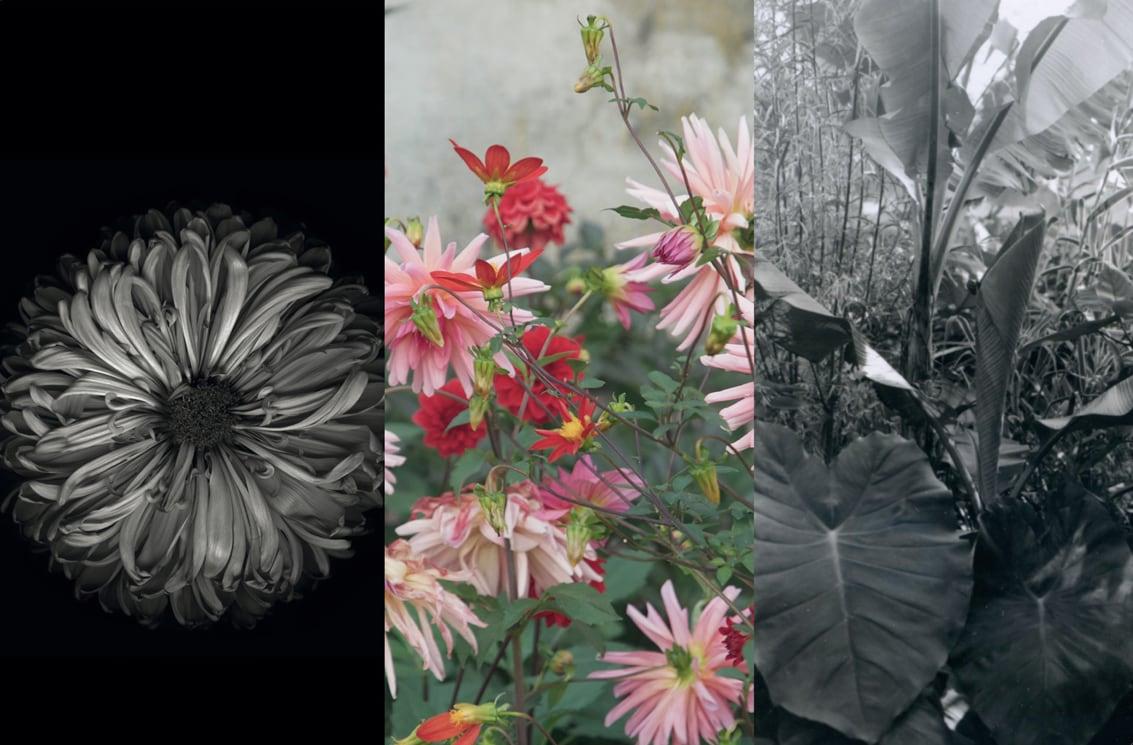 Fotografie e un giardino