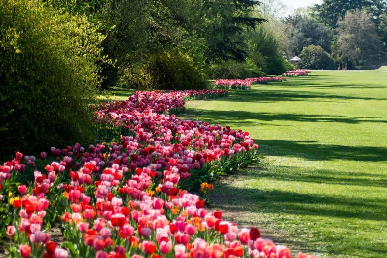 La fioritura più bella d'Italia