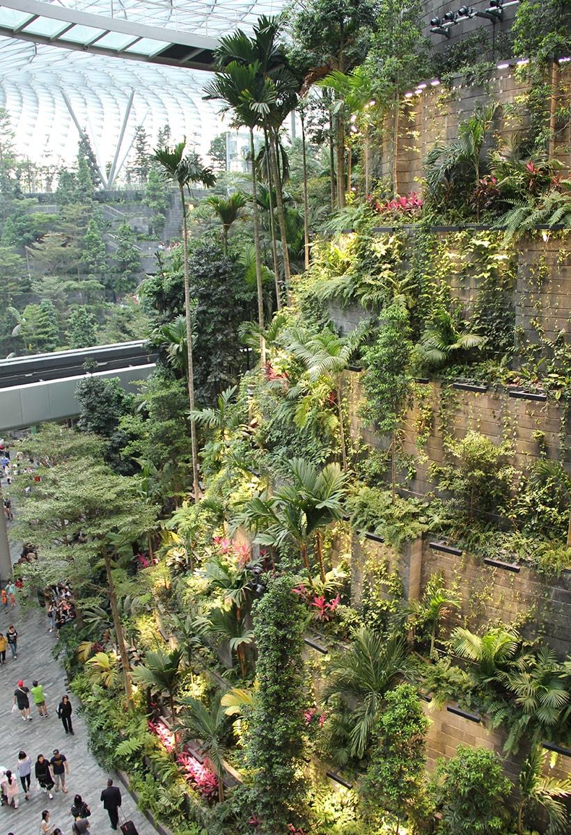 Una foresta pluviale nell'aeroporto