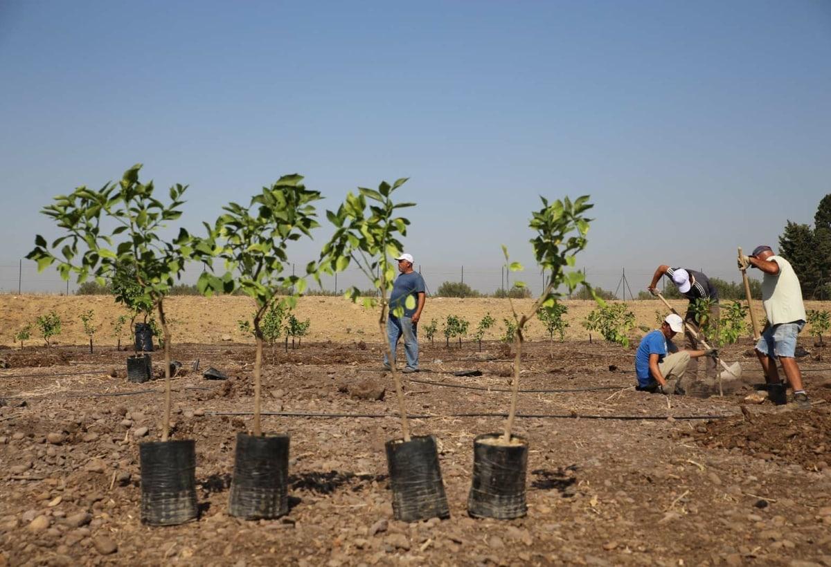 Sicilia – Piantumazione d'agrumi – In collaborazione con la Cooperativa Beppe Montana di Libera Terra, Treedom pianta alberi su terreni confiscati alle Mafie