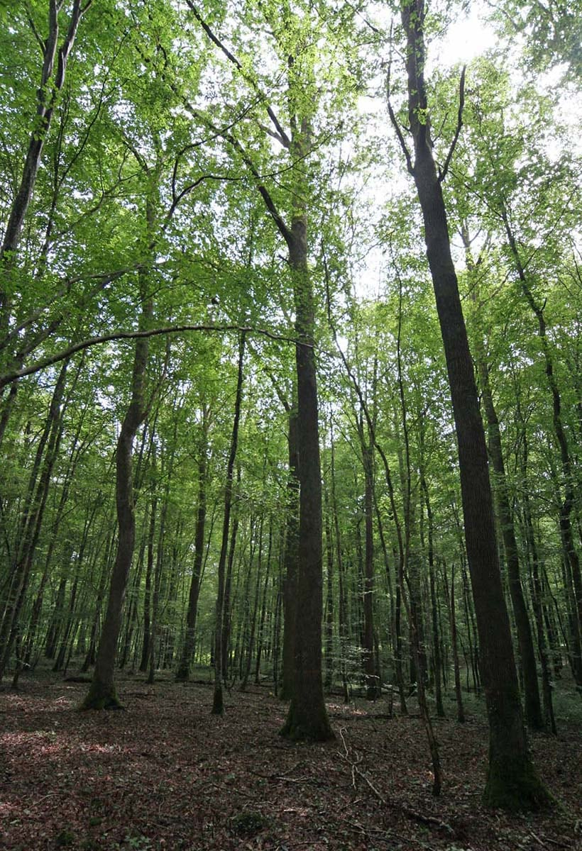 Nelle fibre del legno